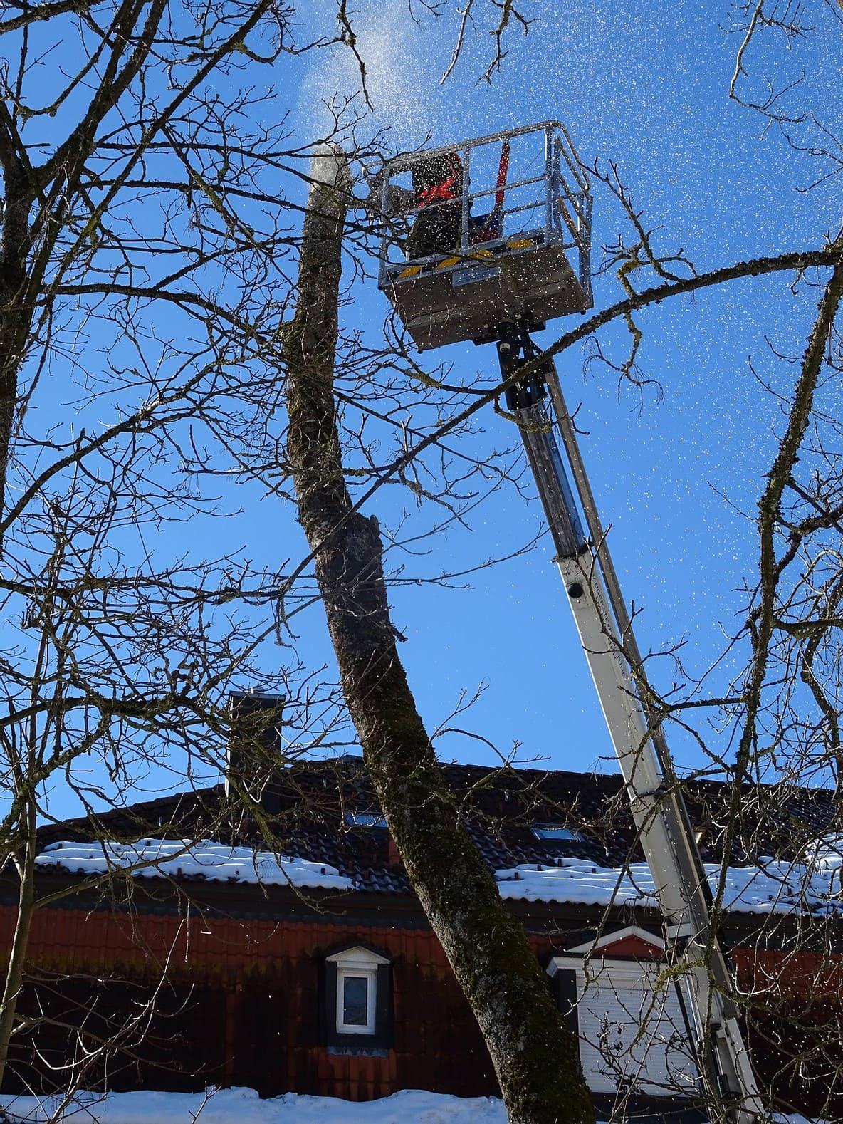 Baumpflege und Fällarbeiten 2