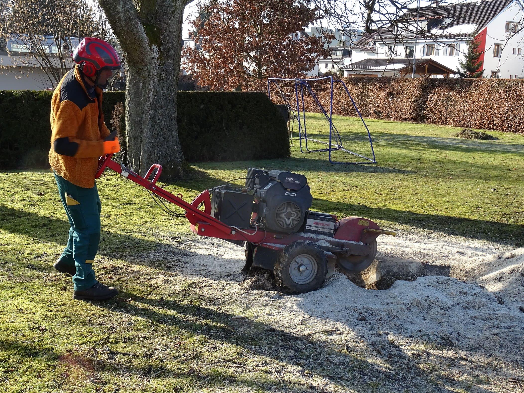Baumpflege und Fällarbeiten 3